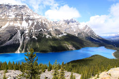 Peyto Lake. In Banff National Park. Alberta. Canada Royalty Free Stock Images