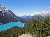 Peyto Lake. In the canadian rockies Royalty Free Stock Image