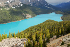 Peyto lake Royalty Free Stock Image