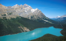 Peyto Lake. Situated between Banff and Jasper along the Icefields Parkway, Peyto Lake is reputedly the bluest glacial lake in the Canadian Rockies Royalty Free Stock Photo