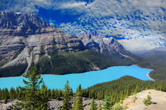 Peyto lake alberta canada Royalty Free Stock Photography