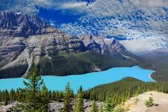 Peyto lake alberta canada Royalty Free Stock Photography