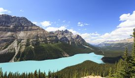 Peyto lake in Alberta Stock Image