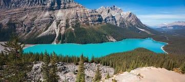 Peyto Lake in Alberta Canada royalty free stock image