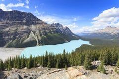 Peyto lake in Alberta Royalty Free Stock Image