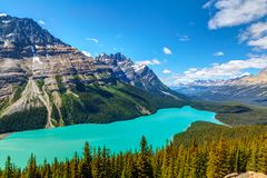 Peyto Lake in Banff National Park on Icefields Parkway Royalty Free Stock Photos