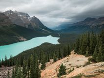 Peyto Lake in Banff Alberta looks like the face of a fox stock photos