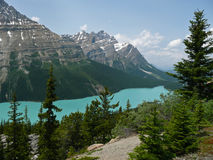 Peyto Lake, Banff, Canada. Peyto Lake in Banff National Park is located close to the Icefields Parkway. The water in the lake has a beautiful color Royalty Free Stock Photo