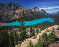 Peyto Lake in Banff Canada Royalty Free Stock Photos