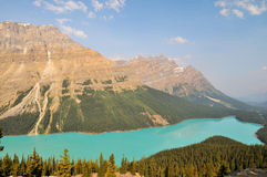 Peyto Lake in Banff National Park Stock Image