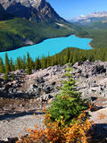 Peyto Lake of Banff National Park Stock Photo
