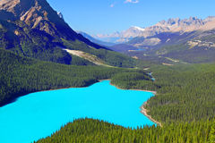 Peyto Lake Banff National Park Stock Photos