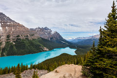 Peyto Lake- Banff National Park- Alberta- Canada. Stock Images