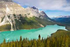 Peyto Lake, Banff National Park Royalty Free Stock Photos