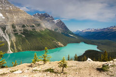 Peyto Lake, Banff National Park Royalty Free Stock Image