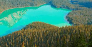 Peyto Lake in Banff National Park Stock Photos