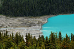 Peyto lake Royalty Free Stock Photo