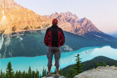 Peyto lake Stock Photography