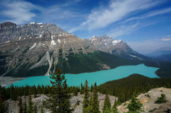 Peyto Lake in Banff National Park Royalty Free Stock Images