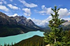 Peyto Lake Banff National Park Stock Images