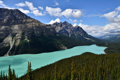 Peyto Lake Banff National Park Stock Images