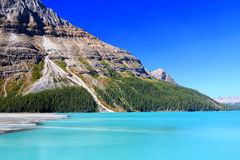 Peyto Lake in Banff Park Stock Image