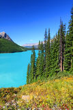 Peyto Lake in Canada Royalty Free Stock Photo