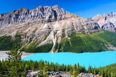 Peyto Lake of Canada Royalty Free Stock Image