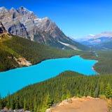 Peyto Lake of Canada Royalty Free Stock Images