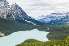 Peyto Lake, Canada Royalty Free Stock Photography