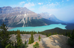Peyto Lake in the Canadian Rockies Royalty Free Stock Images