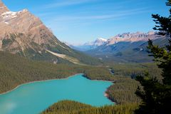 Peyto Lake closeup. Closeup shot of the amazingly turquoise Peyto Lake in Canada Stock Image