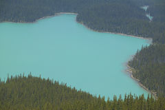 Peyto lake landscape with forest. Icefield parkway. Canada Stock Photos
