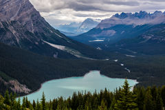 Peyto Lake on an Overcast Day Royalty Free Stock Photo