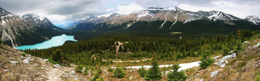 Peyto Lake panorama Royalty Free Stock Photo