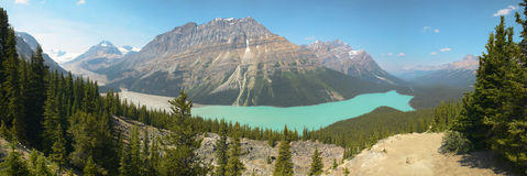 Peyto lake panoramic view. Icefield parkway. Canada Stock Images