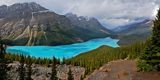Peyto lake on a rainy dark day Royalty Free Stock Photo