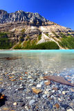 Peyto Lake Scenery Royalty Free Stock Photo
