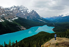 Peyto lake at spring Stock Photography