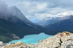 Peyto Lake Squirrel on Rocks 2 stock image