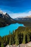 Peyto Lake. Vibrant Blue Peyto Lake from Bow summit Banff National Park, Alberta Canada Royalty Free Stock Photo