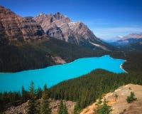 Peyto sjö, Banff Arkivfoton