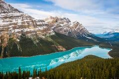 Peyto sjö i den Banff nationalparken Alberta Canada arkivfoto