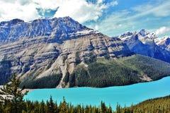 Peyto sjöjaspis, Alberta Royaltyfri Fotografi