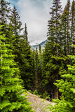 Peyton Lake slinga II Royaltyfri Fotografi