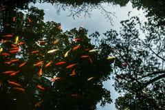 Pez de colores Imagen de archivo libre de regalías