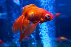 Pez de colores en el acuario Imágenes de archivo libres de regalías