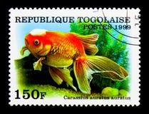 Pez de colores de Veiltail (auratus) del Carassius, serie del pez de colores, circa 199 Imagen de archivo