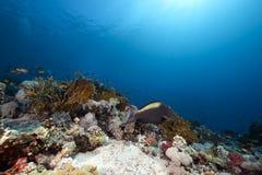 Pez papagayo y océano Fotografía de archivo