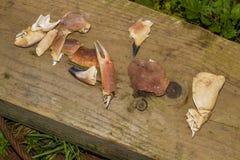 Pezzi del granchio sulla plancia di legno Fotografia Stock